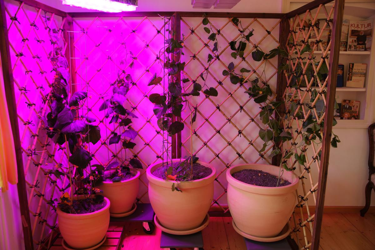 Hanging-Garden-mit-Bambuszaun-Elementen-von-CONBAM
