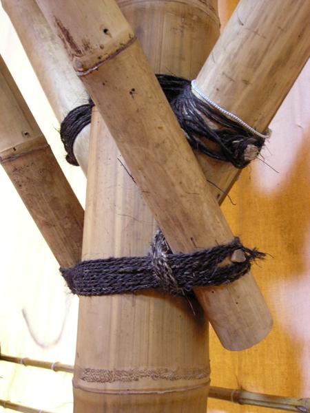 Bambus Nigra Edel Exklusiv Www Bambushandel Conbam De