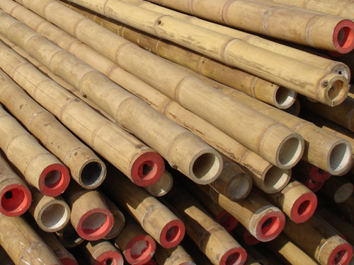 Guadua Natur Stark Robust Www Bambushandel Conbam De