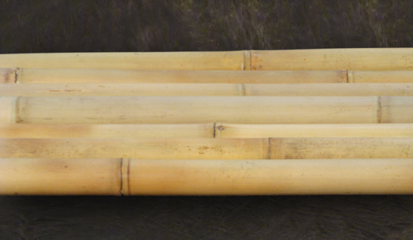 Bambus Tonkin Sehr Robust Www Bambushandel Conbam De
