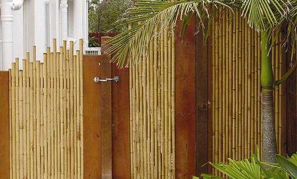 Bambuszaune Finden Sie Hier Www Bambushandel Conbam De